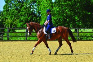 Mayfield Equestrian
